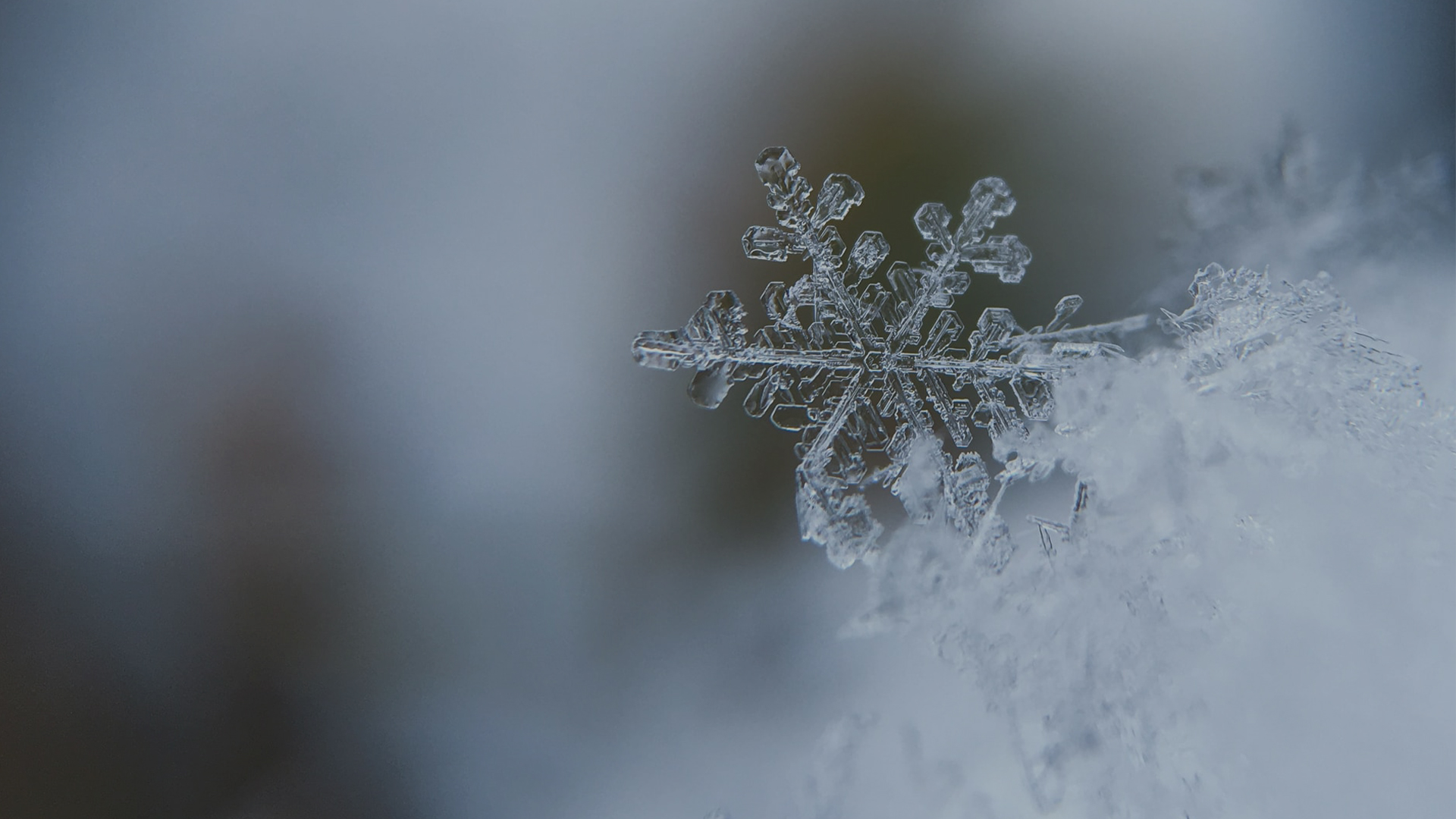 Three Reasons Untitled Prefers Snowflake